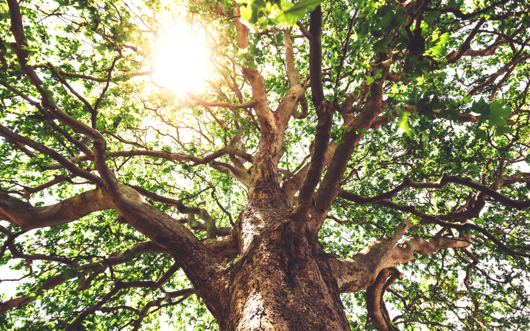 Rooted in God; Growing in Faith