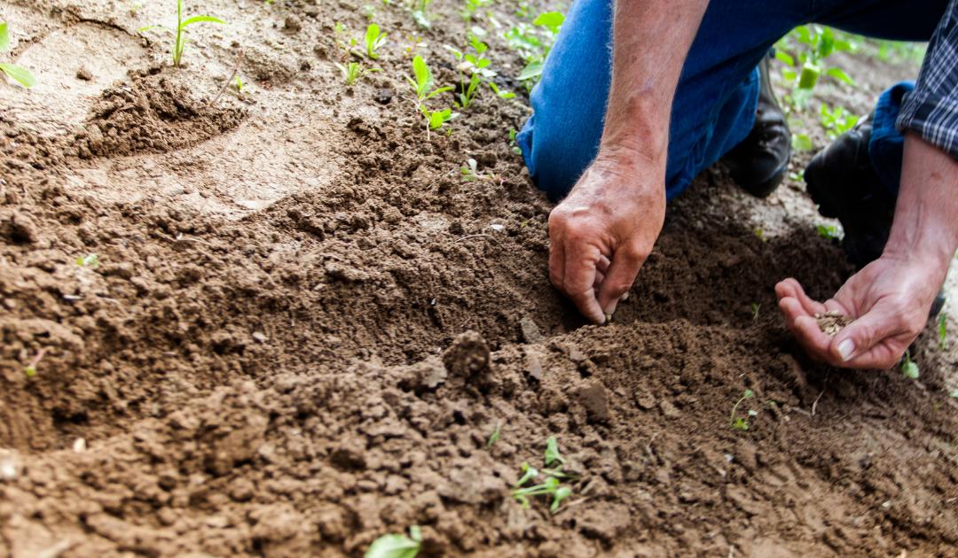 Seeds of Sorrow; Promised Harvest